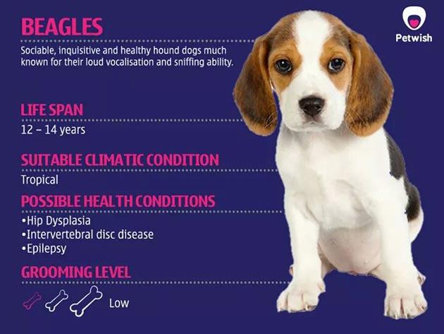 Spesifikasi Anjing Populer Di Indonesia Anjing Artikel Umum