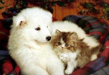 Anjing vs Kucing, Ternyata Hanya Salah Paham - Perawata