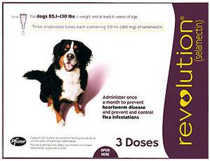 Pemberian Obat Cacing Kesehatan Anjing Anjingkita Com
