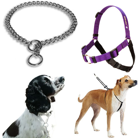 kalung kucing Aksesoris Dog. Source ... Pertama perlu diingat harness .