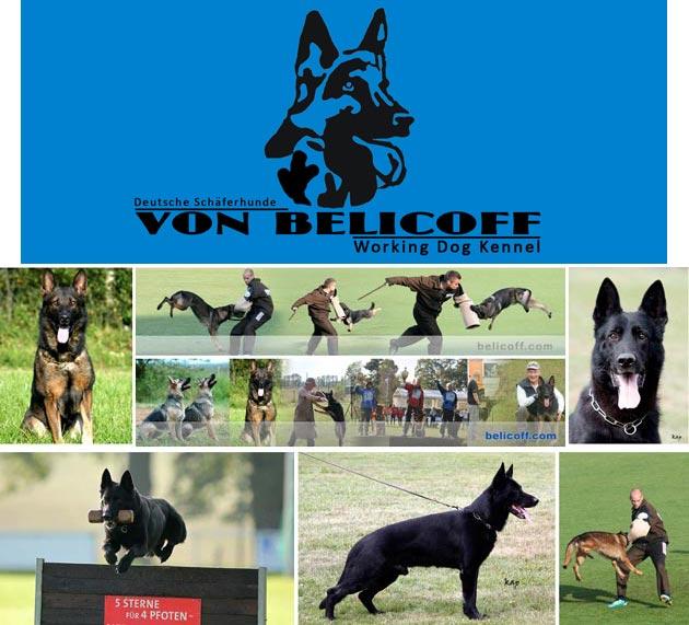 Kennel Anjing Anjing Gembala Jerman (Herder