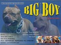 Big Boy Pitbull Kennel
