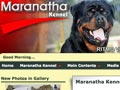 Perubahan Domain Website Maranatha Kennel