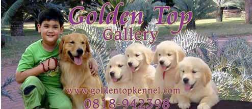 Obat Kutu Jamur Sakit Kulit Tradisional Kesehatan Anjing Anjingkita Com