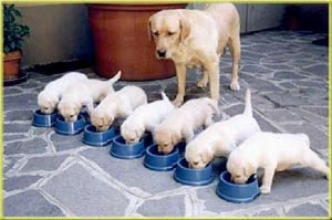 39++ Anak anjing kampung 2 bulan terbaru