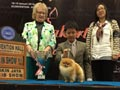 Joe Hauze Pomeranian Kennel