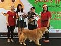 Foto-Foto Amazing Dog Race 4 X'Mas 2014