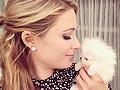 Paris Hilton Beli Anjing Mini Pom Rp 318 Juta