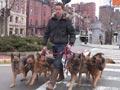 Melatih Anjing Berjalan Tanpa Tali