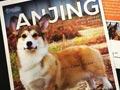 Buku Tentang Anjing