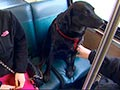 Anjing Ini Naik Bus Sendirian ke Taman Anjing