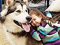 Fakta Tentang Anjing Alaskan Malamute