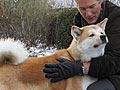 Fakta Tentang Anjing Akita Inu