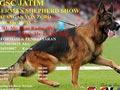 Pameran Anjing Herder & Ujian BH IPO Jatim