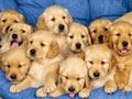 Tips Merawat Anjing Yang Baru Dibeli