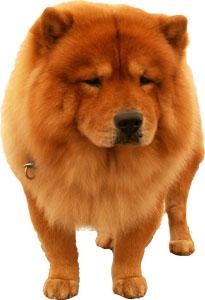 Diskusi Dan Komentar Mengenai Fifty One Kennel Anjingkita Com